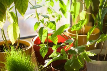 Our Key Tips For A Cool Indoor Garden